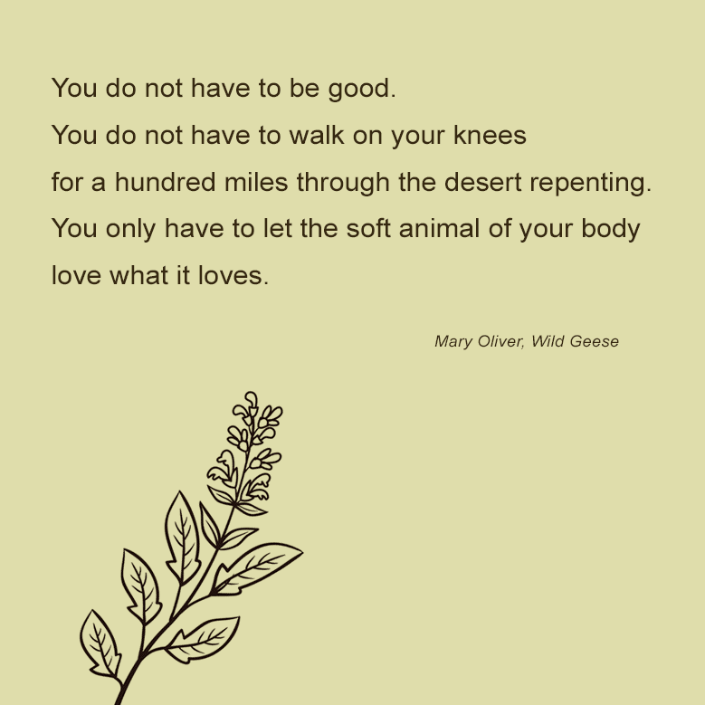 Quote from Mary Oliver